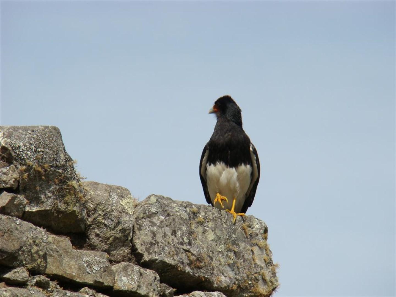 Machu Picchu Andean Peru Treks