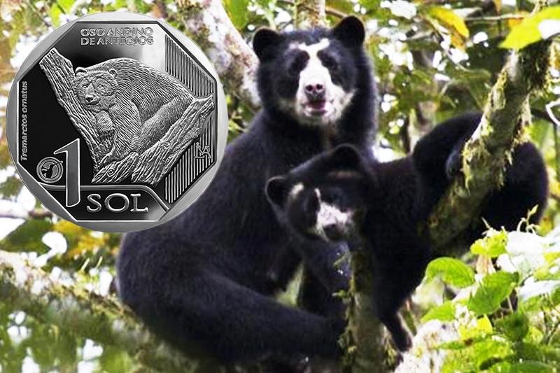 moneda-oso-anteojos - Andean Peru Treks